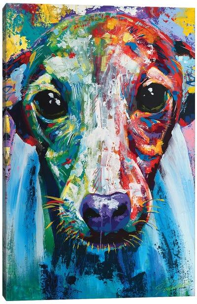Italian Greyhound I Canvas Art Print