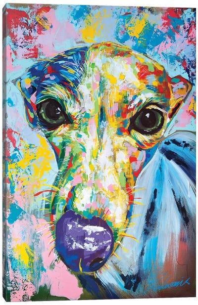 Italian Greyhound II Canvas Art Print