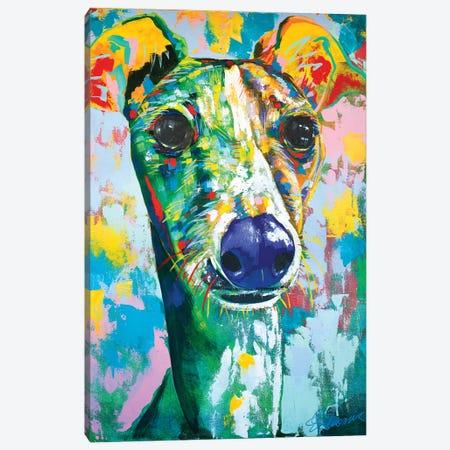 Italian Greyhound IV Canvas Print #TKA18} by Tadaomi Kawasaki Canvas Wall Art