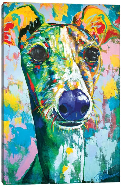 Italian Greyhound IV Canvas Art Print