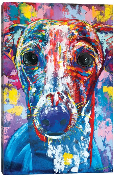 Italian Greyhound V Canvas Art Print