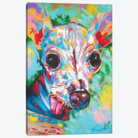 Italian Greyhound 06 Canvas Print #TKA44} by Tadaomi Kawasaki Canvas Art