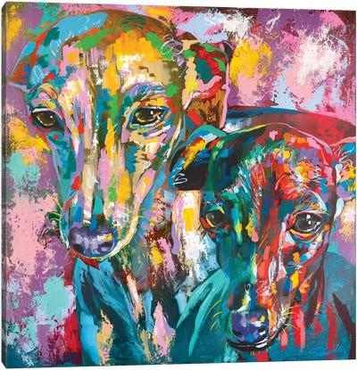 Italian Greyhound 07 Canvas Art Print