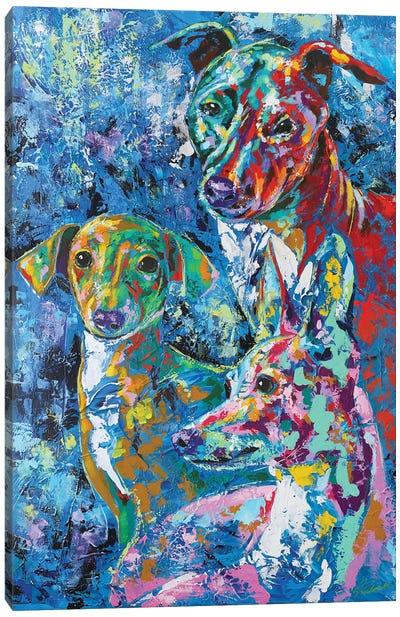 Italian Greyhound XI Canvas Art Print