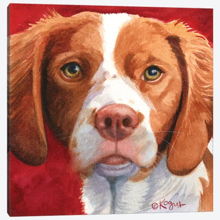 Bella The Brittany Canvas Print #TKG23} by Teresa Kogut Canvas Print