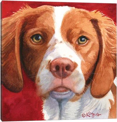 Bella The Brittany Canvas Art Print