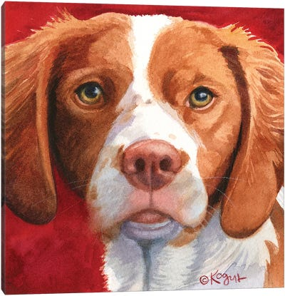 Bella The Brittany Canvas Art Print