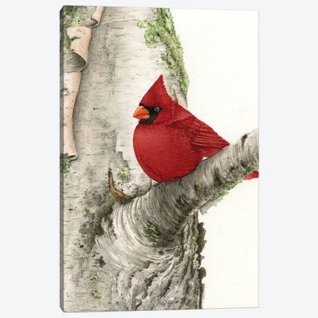 Cardinal In Birch Tree Canvas Print #TLZ17} by Tracy Lizotte Art Print