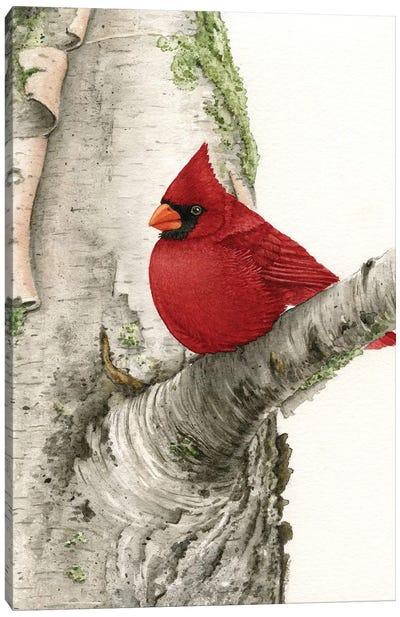 Cardinal In Birch Tree Canvas Art Print