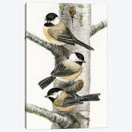 Chickadees In Birch Tree Canvas Print #TLZ20} by Tracy Lizotte Canvas Art Print