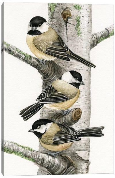 Chickadees In Birch Tree Canvas Art Print