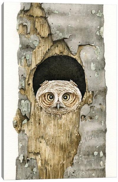 Peek A Boo Owl Canvas Art Print
