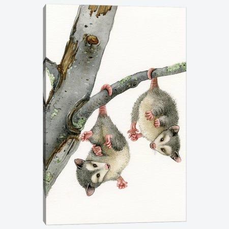 Playful Possums Canvas Print #TLZ63} by Tracy Lizotte Canvas Art Print