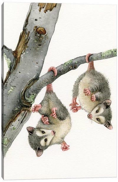 Playful Possums Canvas Art Print