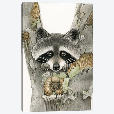 Raccoon Canvas Print #TLZ64} by Tracy Lizotte Canvas Wall Art