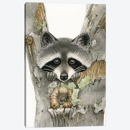 Raccoon Canvas Print #TLZ64} by Tracy Lizotte Canvas Wall Art