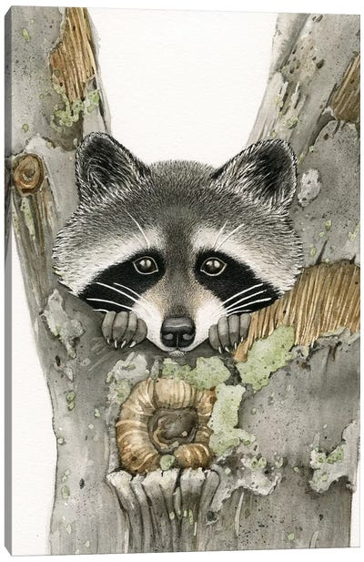 Raccoon Canvas Art Print