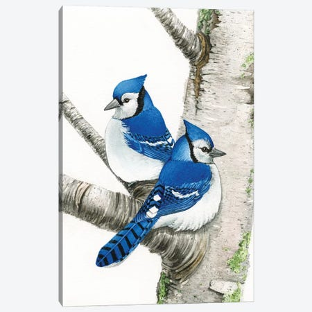 Blue Jays In Birch Tree Canvas Print #TLZ6} by Tracy Lizotte Canvas Art Print