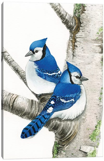 Blue Jays In Birch Tree Canvas Art Print
