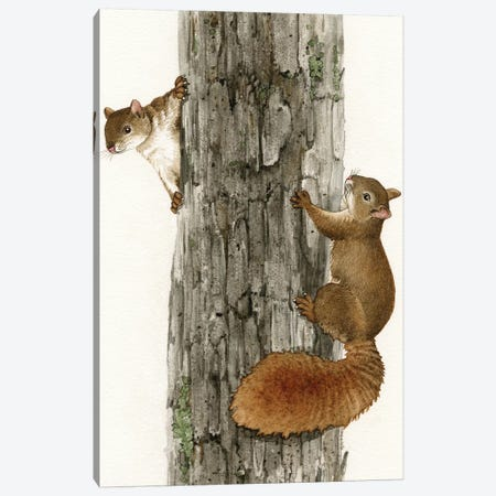 Squirrel Tag Canvas Print #TLZ74} by Tracy Lizotte Canvas Print