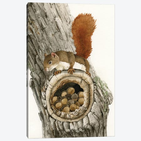 The Nut Collector Canvas Print #TLZ80} by Tracy Lizotte Art Print