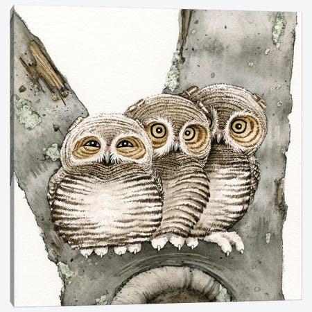 Three Owls Canvas Print #TLZ84} by Tracy Lizotte Canvas Wall Art
