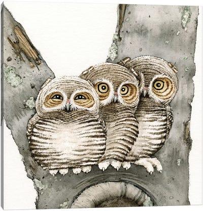 Three Owls Canvas Art Print