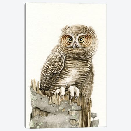 Wandering Owl Canvas Print #TLZ88} by Tracy Lizotte Canvas Print