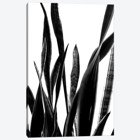 Plant VI Canvas Print #TMD36} by The Maisey Design Shop Canvas Artwork