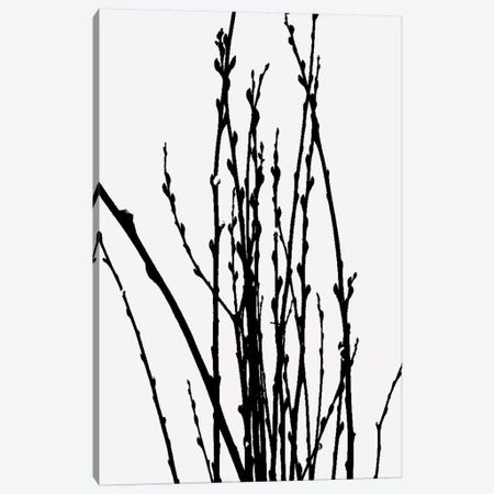 Stick Plant VI Canvas Print #TMD49} by The Maisey Design Shop Canvas Wall Art