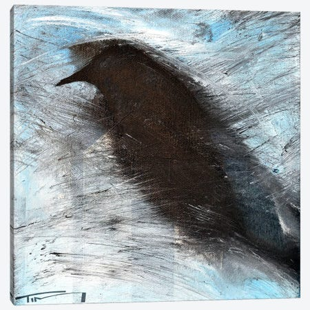 Blackbird In Wind Canvas Print #TNG217} by Tim Nyberg Canvas Wall Art
