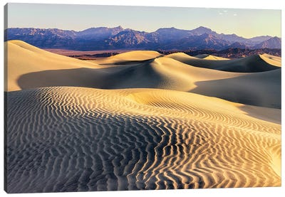 Mesquite Sand Dunes. Death Valley. California II Canvas Art Print