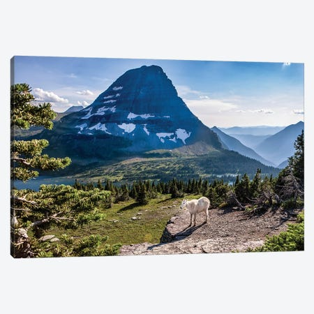 Mountain Goat in front of Bearhat Mountain and Hidden Lake. Glacier National Park, Montana, USA. Canvas Print #TNO14} by Tom Norring Canvas Art Print