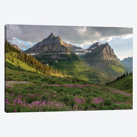 Wildflowers and Mountains. Glacier National Park, Montana, USA. Canvas Print #TNO18} by Tom Norring Canvas Artwork