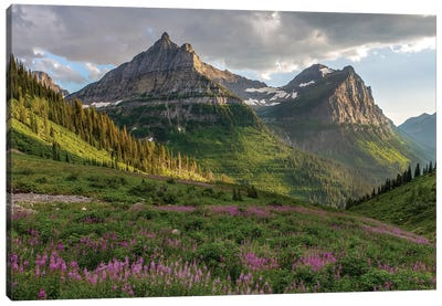 Wildflowers and Mountains. Glacier National Park, Montana, USA. Canvas Art Print