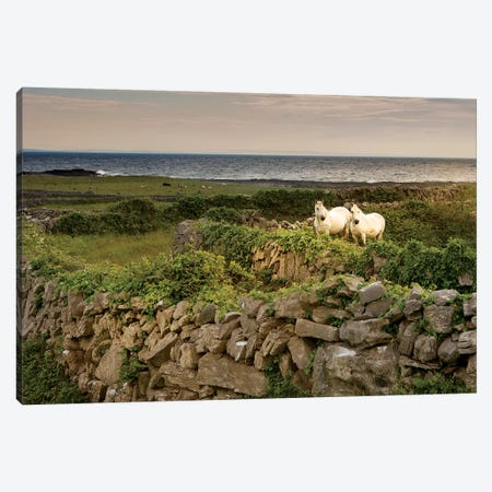 Inishmore Island. Aran Islands. Ireland. Horses Behind Rocky Fences 3-Piece Canvas #TNO26} by Tom Norring Canvas Artwork