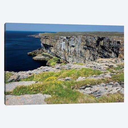 Inishmore Island. Aran Islands. Ireland. Limestone Sea Cliffs. Atlantic Coast. Flowers On Rocks Canvas Print #TNO27} by Tom Norring Canvas Art
