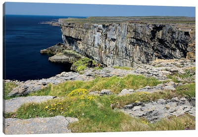Inishmore Island. Aran Islands. Ireland. Limestone Sea Cliffs. Atlantic Coast. Flowers On Rocks Canvas Art Print