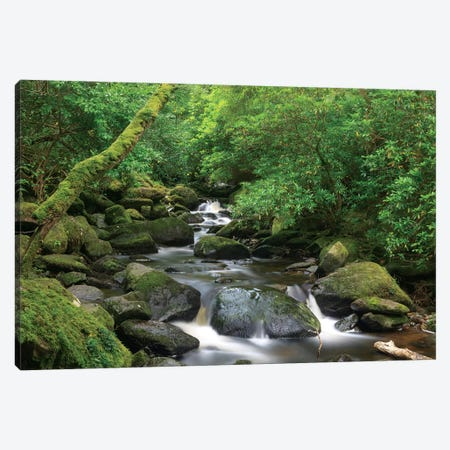 Killarney National Park, County Kerry, Ireland. Torc Waterfall. Canvas Print #TNO29} by Tom Norring Art Print
