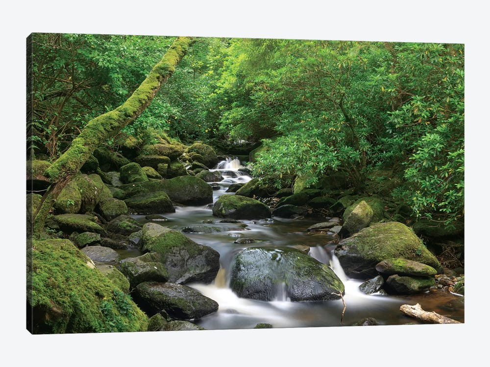 Killarney National Park, County Kerry, Ireland. Torc Waterfall. by Tom Norring 1-piece Canvas Artwork