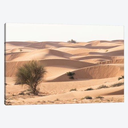 Desert with sand. Abu Dhabi, United Arab Emirates. Canvas Print #TNO38} by Tom Norring Canvas Wall Art