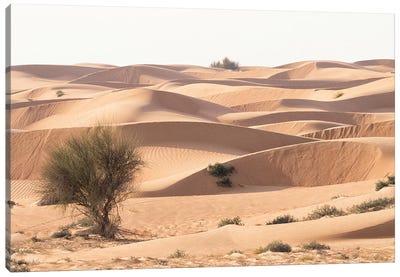 Desert with sand. Abu Dhabi, United Arab Emirates. Canvas Art Print
