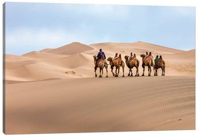 Camel Caravan in the Dunes. Gobi Desert. Mongolia. Canvas Art Print