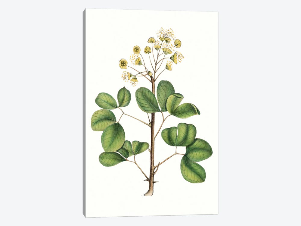 Foliage & Blooms IV by Thomas Nuttall 1-piece Art Print