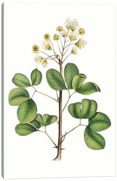 Foliage & Blooms IV Canvas Art Print