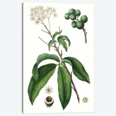 Foliage & Blooms II Canvas Print #TNU8} by Thomas Nuttall Art Print