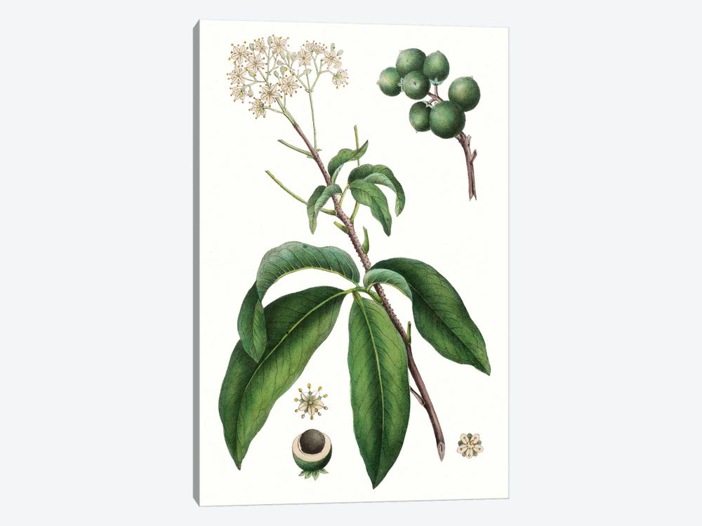 Foliage & Blooms II by Thomas Nuttall 1-piece Art Print