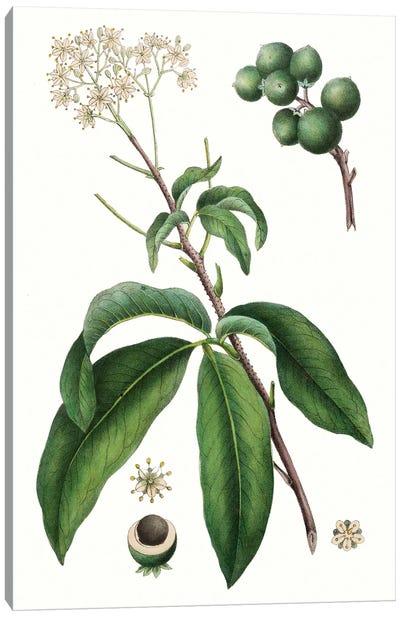 Foliage & Blooms II Canvas Art Print