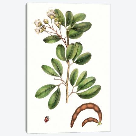 Foliage & Blooms III Canvas Print #TNU9} by Thomas Nuttall Canvas Print