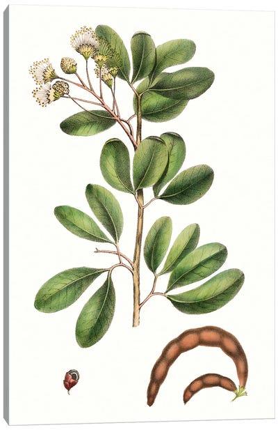 Foliage & Blooms III Canvas Art Print